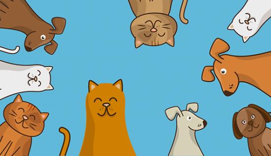 Пять фильмов, которые помогут уговорить родителей завести домашнее животное